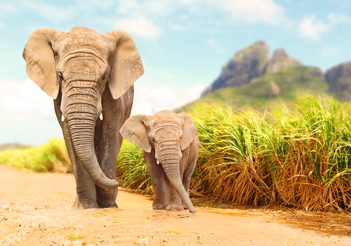 略奪愛に効果がない象の画像