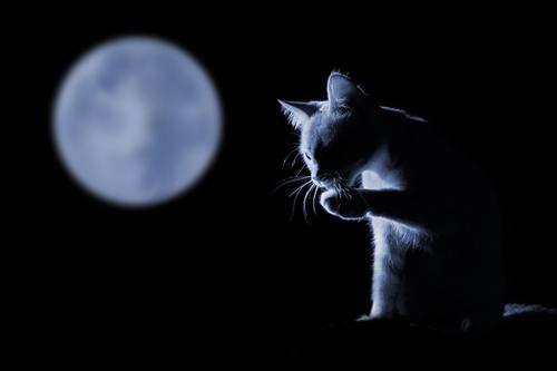 連絡がくる満月と黒猫の待ち受け画像