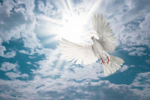好きな人とずっと一緒にいられる白い鳩の待ち受け画像
