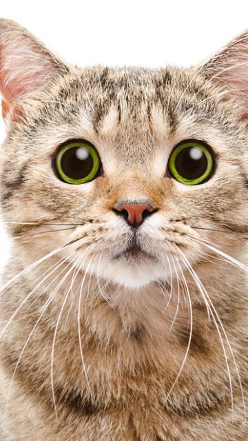 復縁できる猫の待ち受け画像